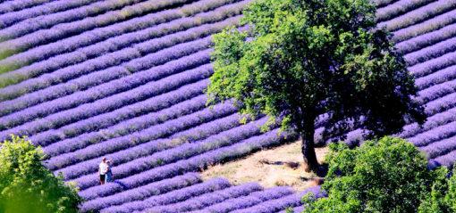 Carte postale de Sault en Provence