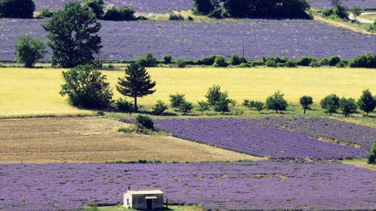 Pays de Sault en Provence