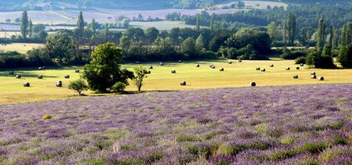 Plateau de Sault en Provence au pied du Ventoux
